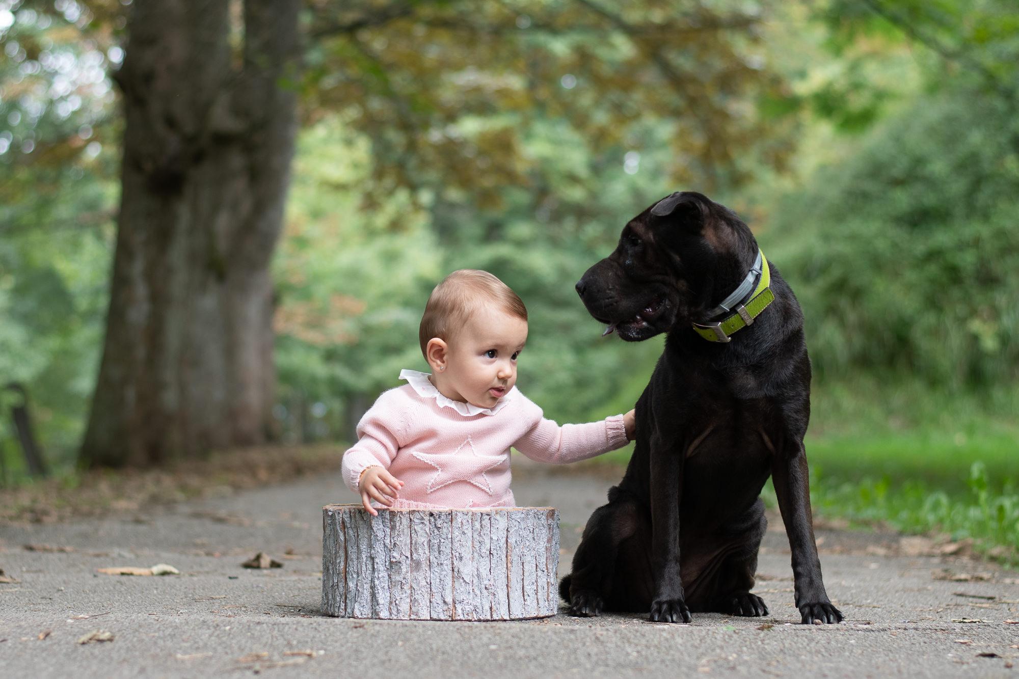 presets para fotografía de mascotas