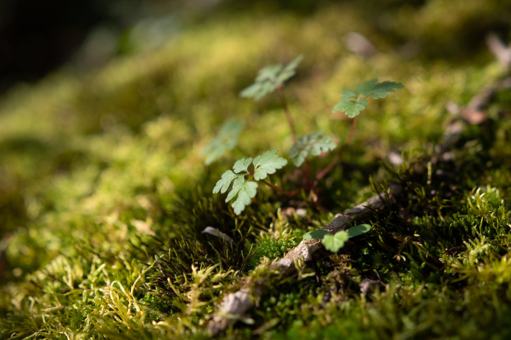 presets para fotografía de naturaleza